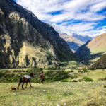 A Peruvian woman walking through the Sacred Valley with her horse and dog following along behind her.