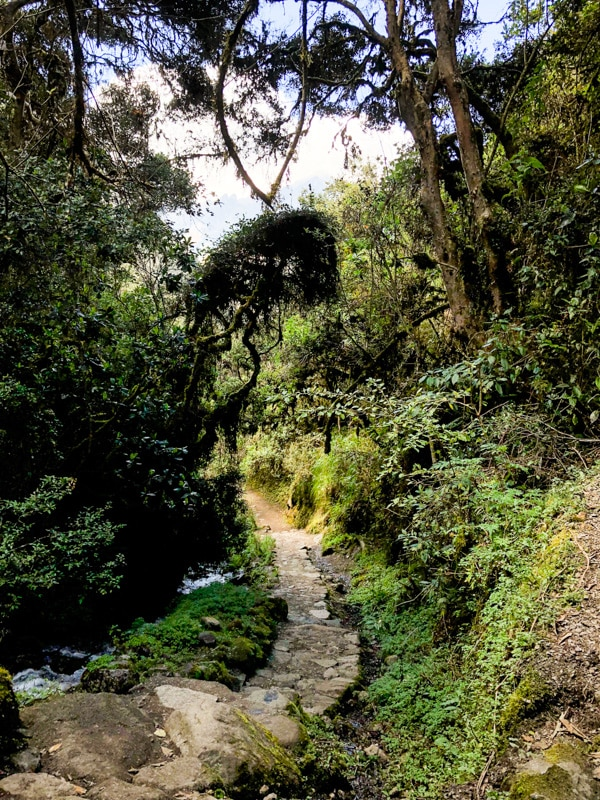 A narrow footpath winding through the jungle along the Inca Trail.