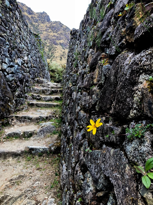 Even more stairs on the Inca Trail