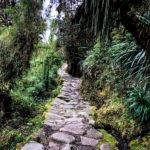 The Inca Trail winding through a luscious jungle.
