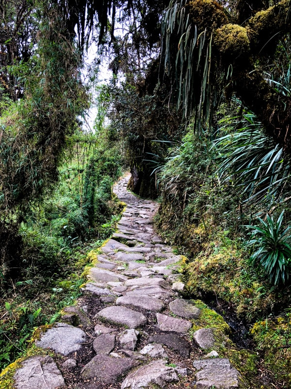 The Inca Trail winding through a luscious jungle.