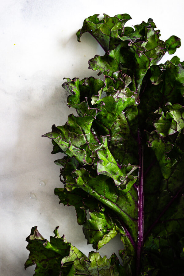 A bright green kale leaf with purple veins.